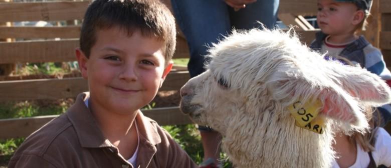 National Alpaca Day - Open Farm