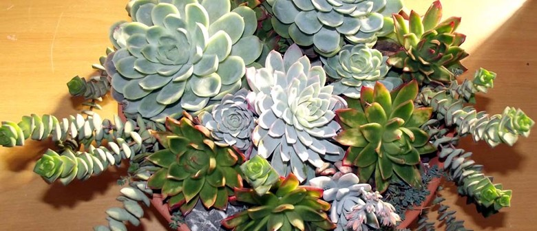 Wellington/Hutt Valley Cactus and Succulent Society Show