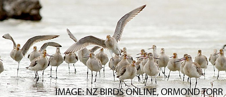 Our Migratory Birds Longest Journey Ever
