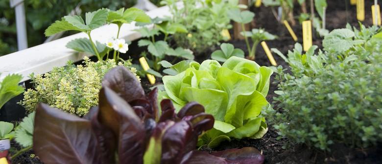 Kai Auckland Gardening Workshops