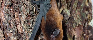 Bat Spotting at Pelorus