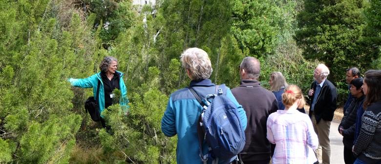 Guided Walk: New Zealand Botanical Oddities