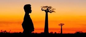 Baobabs between Land and Sea (film)