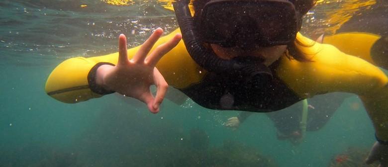 Mathesons Bay Snorkel Day