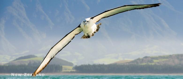 NZ Wildlife & Landscape Photography Tour - 7 Days