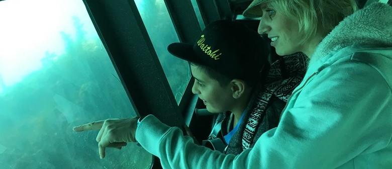Celebrate Seaweek: The Reef Project