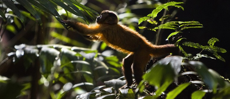 Amazonia - Outdoor Film Event (Fundraiser)