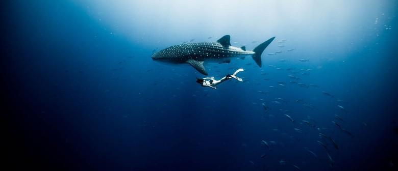 Ocean Film Festival: Dunedin