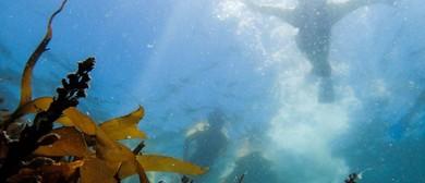 Waiheke Snorkel Day