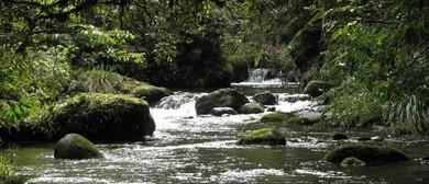 Guided Walk of Rapurapu Kauri Track