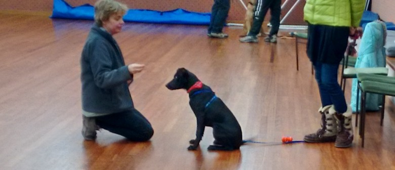 Life Skills Dog Training for all dogs- 5 weeks- indoors