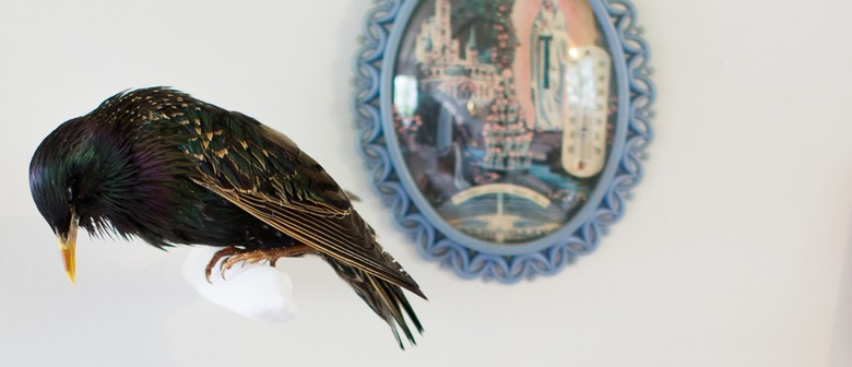 Studio One Toi Tū - Introduction to Taxidermy