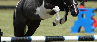 The NZ Miniature Horse National Show