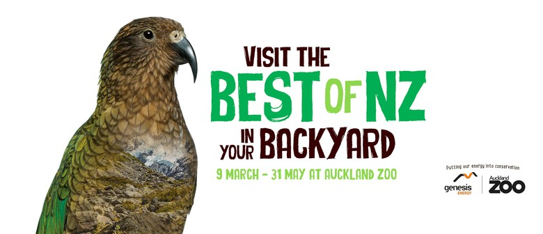 Visit the Best of New Zealand In Your Backyard