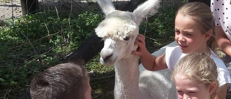 Blueridge Farm Alpacas Open Day