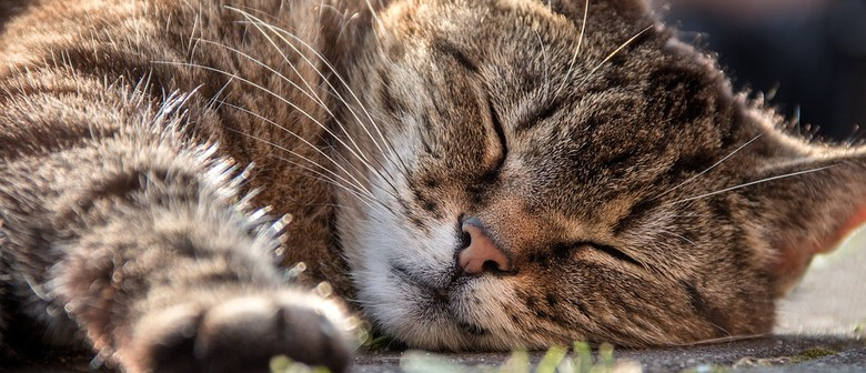 Cat Microchipping In the Community - Tawa