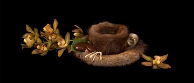 Niki Hill: Fresh, Fur & Flesh