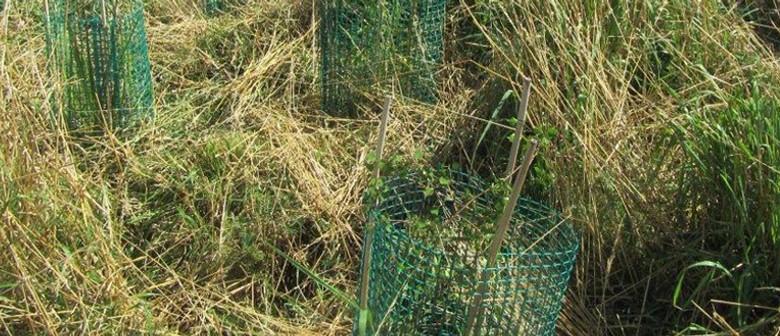 Port Hills Volunteering - Cage-making
