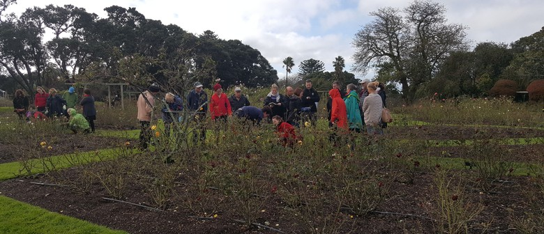 Auckland Rose Society Pruning Demonstration