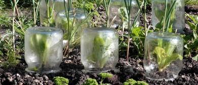 Organic Vegetable Gardening With Kelmarna Staff: CANCELLED
