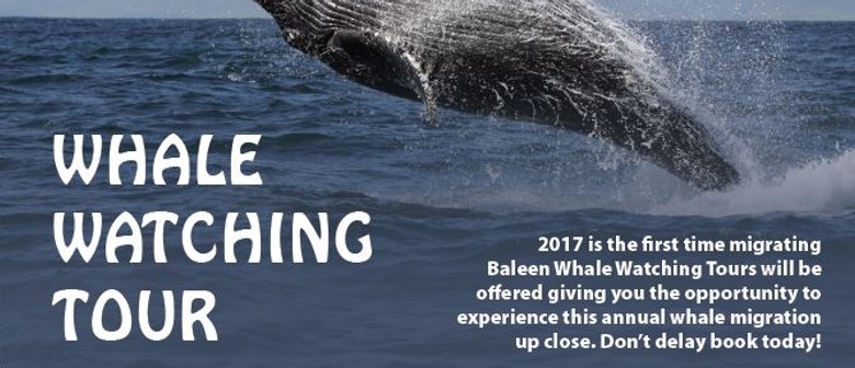 Whale Watching Tour 2017