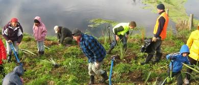 Waitangi Estuary Wetlands Community Planting Day
