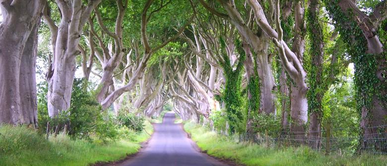 Climb Your Family Tree