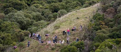 Month of Tree Planting - Island Bay