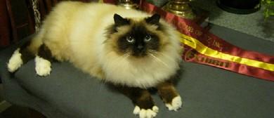 Sacred Temple Cat Club Birman Show - 20th Anniversary