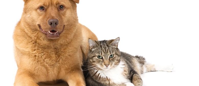 Animal Healing Course