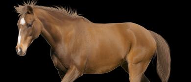Alternative Thearpies for Horses Workshop