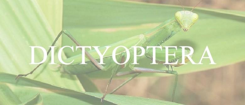 Opening: Paul Timings, Dictyoptera