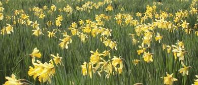 Carterton Daffodil Festival 2017