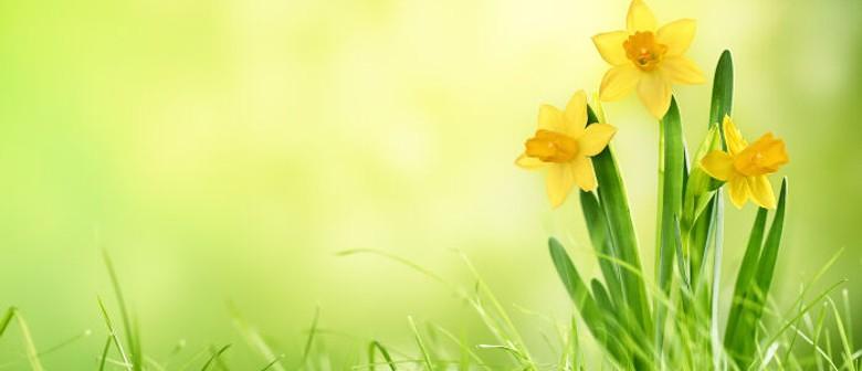 Feilding Music Society Daffodil Day Concert