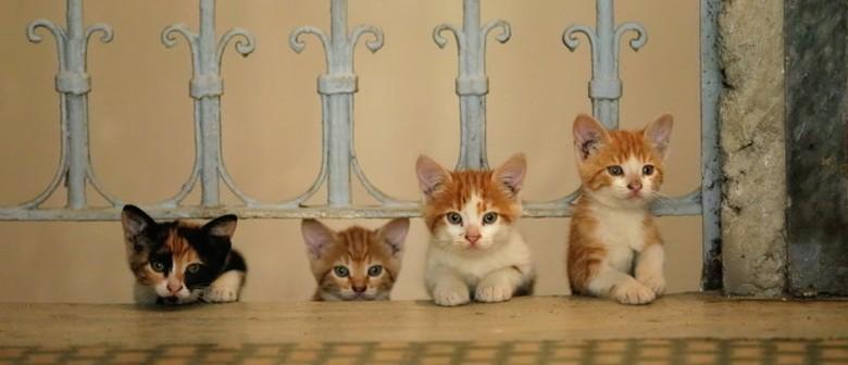 Film: Kedi