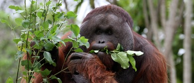 Join Us to Celebrate World Orangutan Day