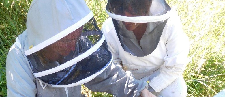 Beekeeping and Varroa Management – for Existing Or Beginner