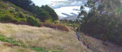 Discover Uramau - Walk Twenty Two