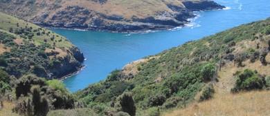 Walk on the Wildside - Fishermans Bay - Walk Twenty Eight: SOLD OUT