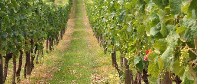 Marlborough Wine Tours