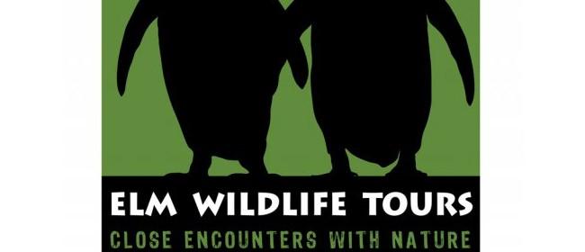 Elm Wildlife Tours