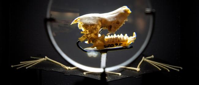 Waitomo Caves Museum