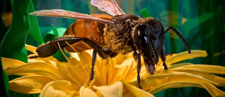 Arataki Honey Visitor Centre