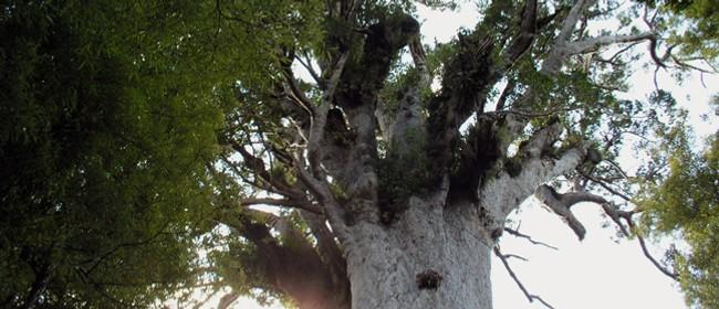 Waipoua Forest Giants - Roadside Stories