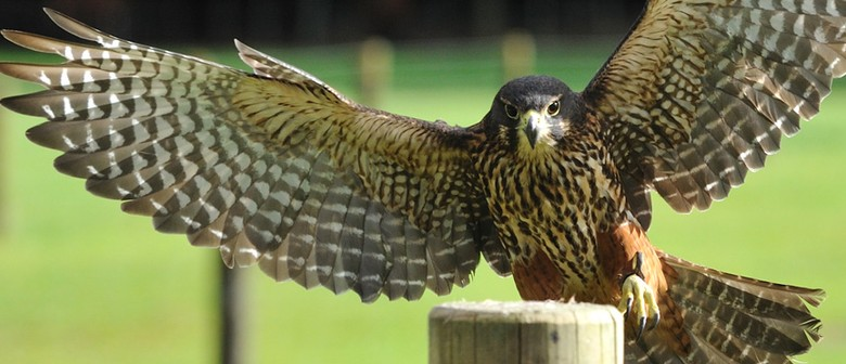 Wingspan National Bird of Prey Centre
